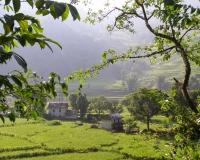 Trekking through paddy fields