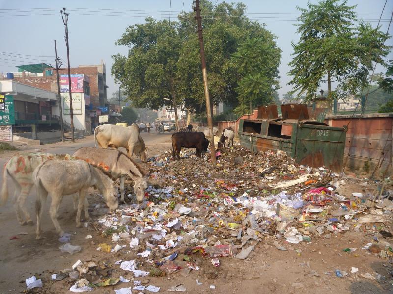 Agra street scene